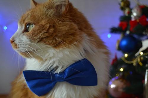 着飾った猫
