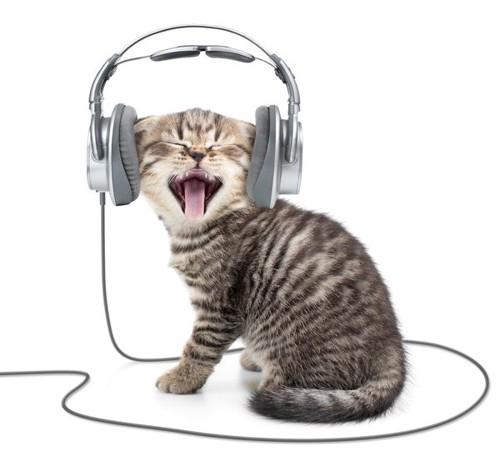 音をきく子猫