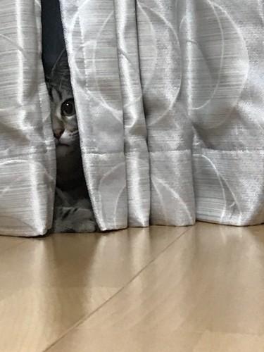 陰に潜む猫