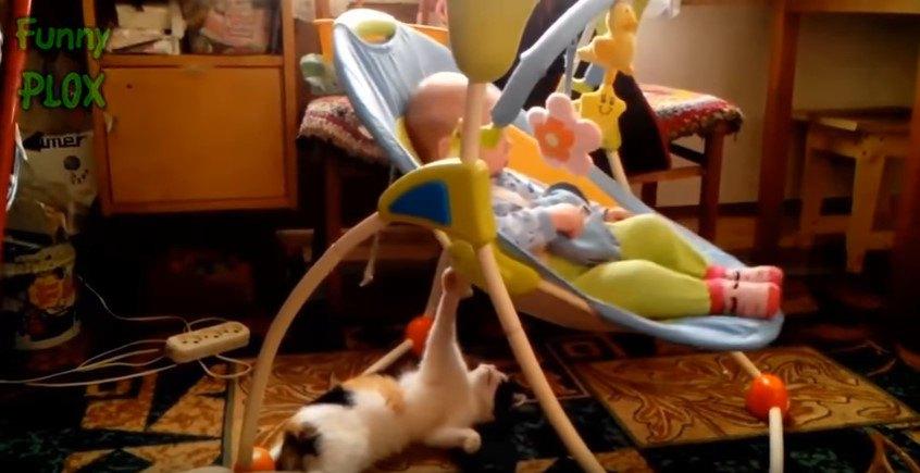 揺りかごを揺らす猫