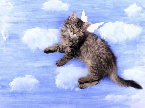 雲の絵を背景に天使の羽をつけた猫