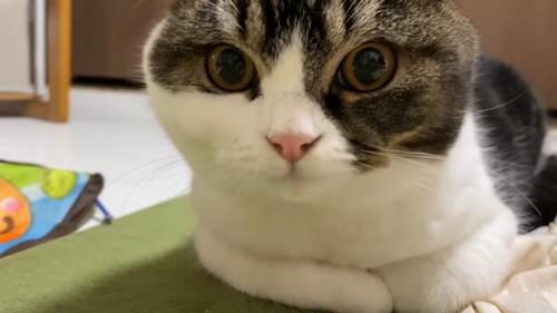 前を見る猫