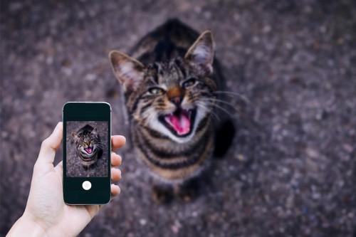 こちらを見て鳴く猫をスマホの画面に写す人の手