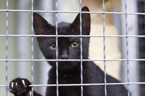 編み目越しに見つめる黒猫