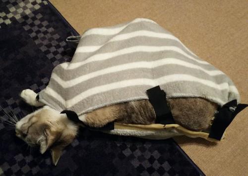 布に包まれた猫