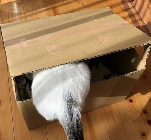 段ボールハウスと猫のおしり