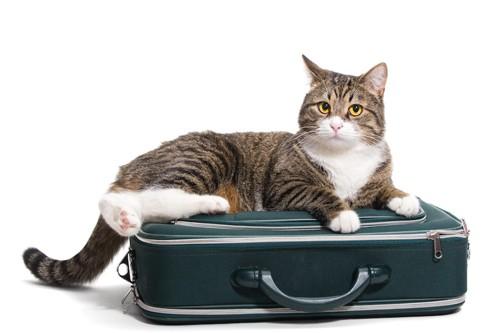 スーツケースの上に乗る猫