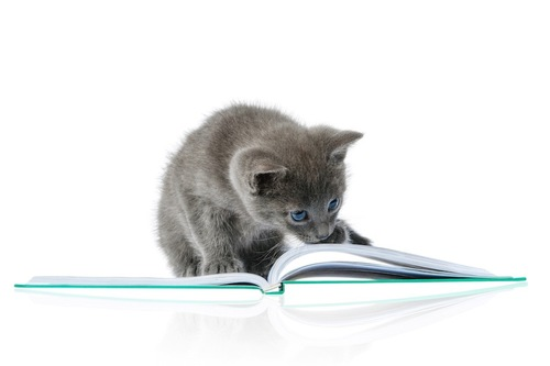 本の上に乗っている子猫