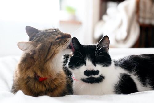 隣の猫の耳をなめる猫