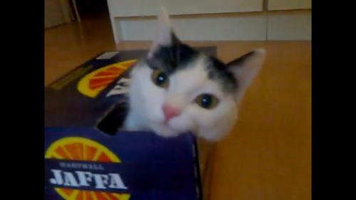 顔を出す猫