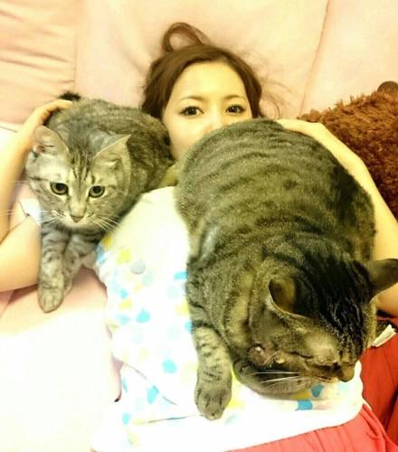 しょこたんにお尻を向ける猫たち