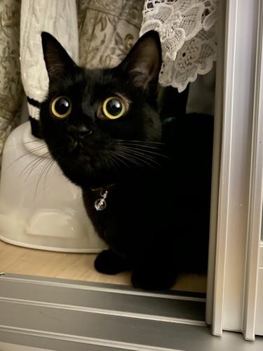 黒目がホラーな猫