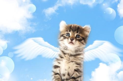 天使になった猫