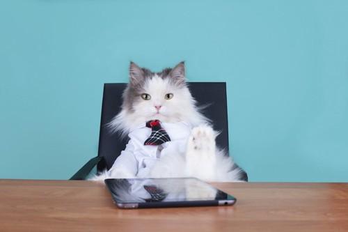 椅子に座っているボスのような猫