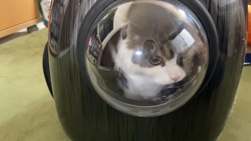 キャリーに入っている猫