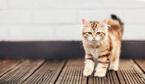 悲しげな子猫
