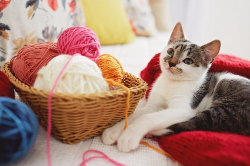 セーターの上の猫