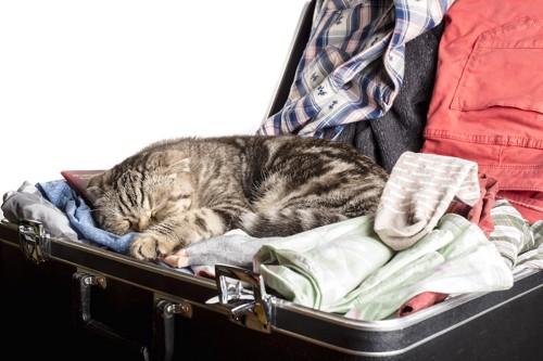 スーツケースの中の洋服の上で眠る猫