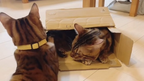 箱に入る猫と子猫
