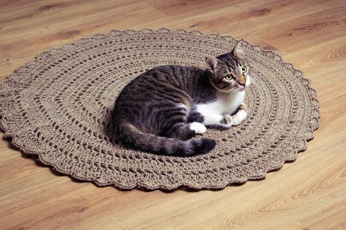 丸いマットの上で休む猫