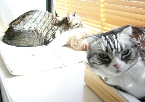 窓辺の3匹