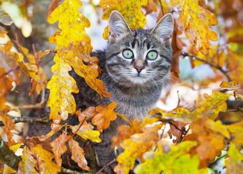 秋の景色を楽しむ猫