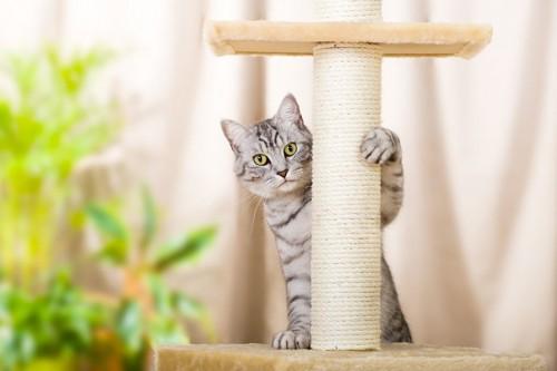 キャットタワーの支柱の後ろにいる猫