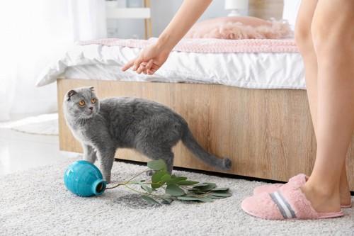 花瓶を倒す猫を怒る女性