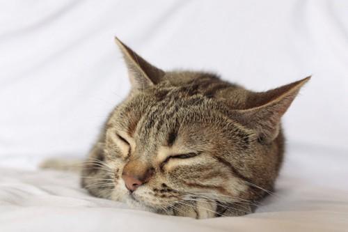 眠っているマンクス