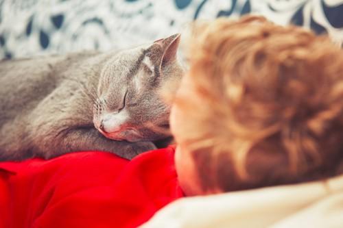 飼い主さんに乗って寝る猫
