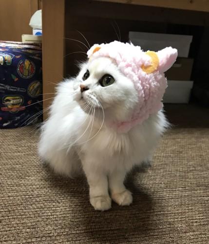 羊のかぶりものを被る猫