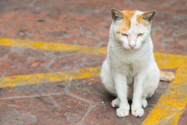 外にいる白と茶色の猫