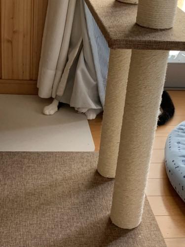 カーテンの裏の猫トラップ