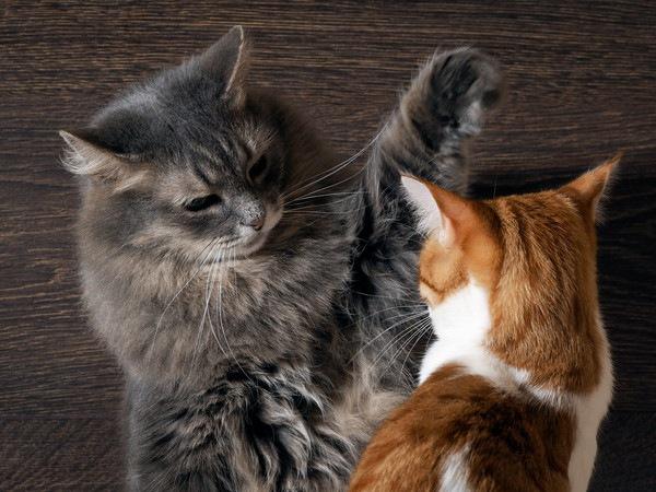 喧嘩をする猫たち