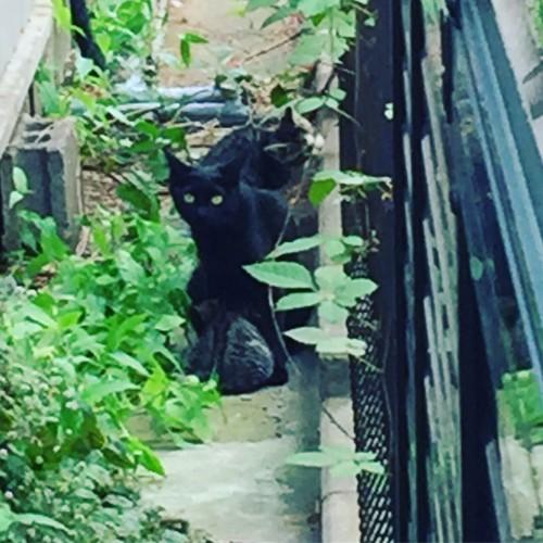 母猫と仔猫2匹