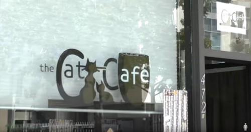 猫カフェの看板