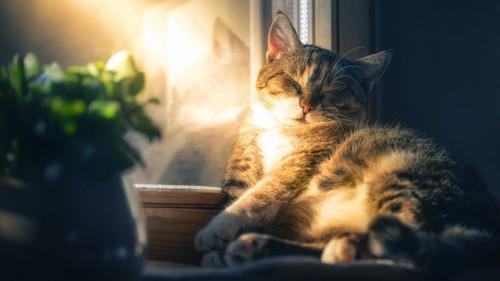 窓際に寝ている猫