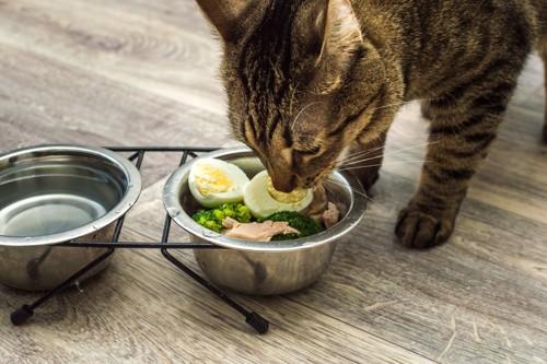 サラダを食べる猫