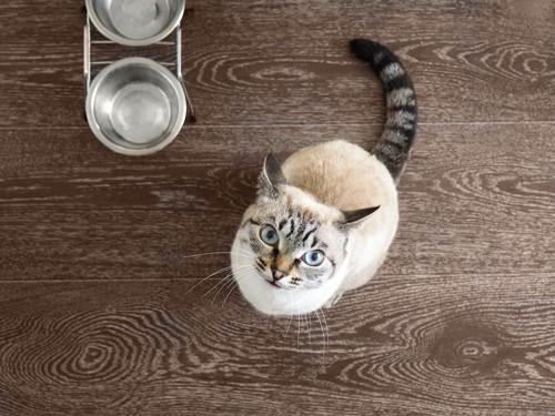 空のフードボウルとこちらを見上げる猫