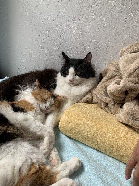 眠る妹猫と守る兄猫