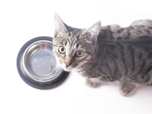 空のお皿とこちらを見る猫