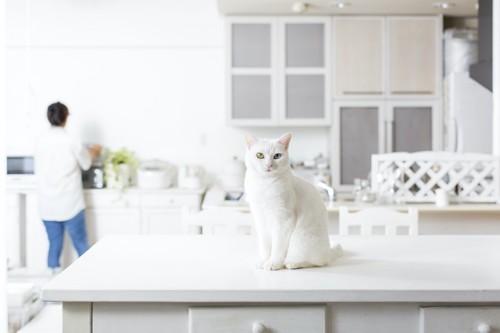 キッチンのテーブルの上に座る白猫