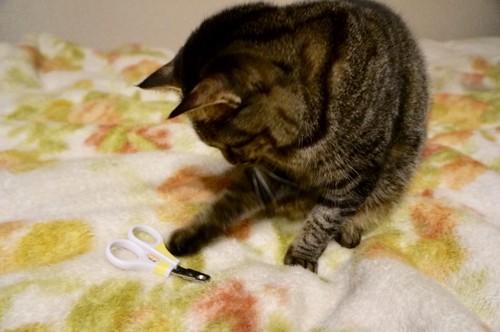爪切りと戯れる猫