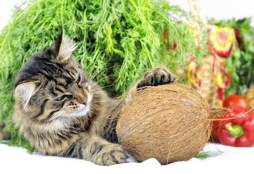 ココナッツと猫