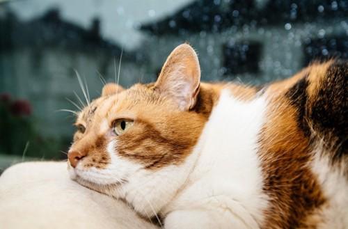 窓際でまどろむ猫