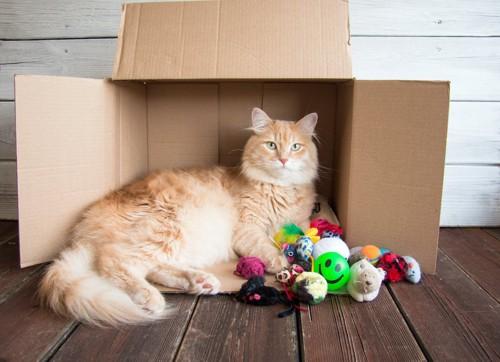 横になった段ボールの前でたくさんのおもちゃとくつろぐ猫