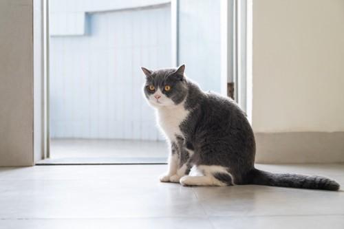 警戒中の座り方をする猫