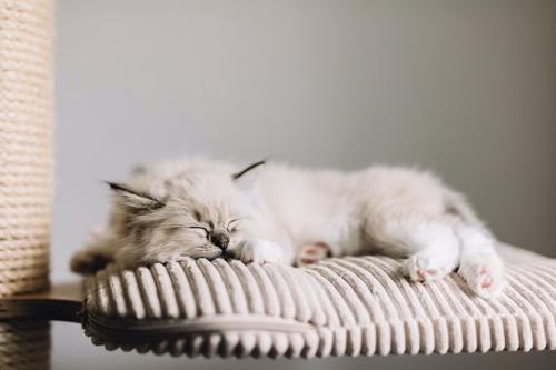 キャットタワーで眠る白いふわふわの猫