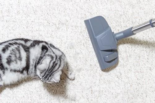 掃除機から逃げようとする猫