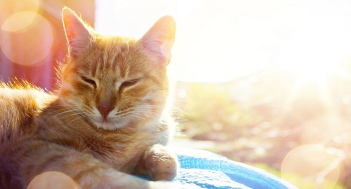 目を細める茶トラ猫